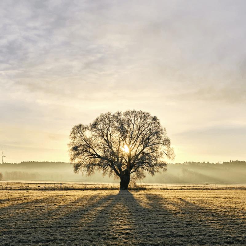 Blogbeitrag Stille | Mutmachinstitut | Claudia Kloihofer Haupt